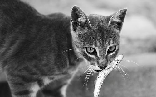 cat vs fish | by ultimcodex