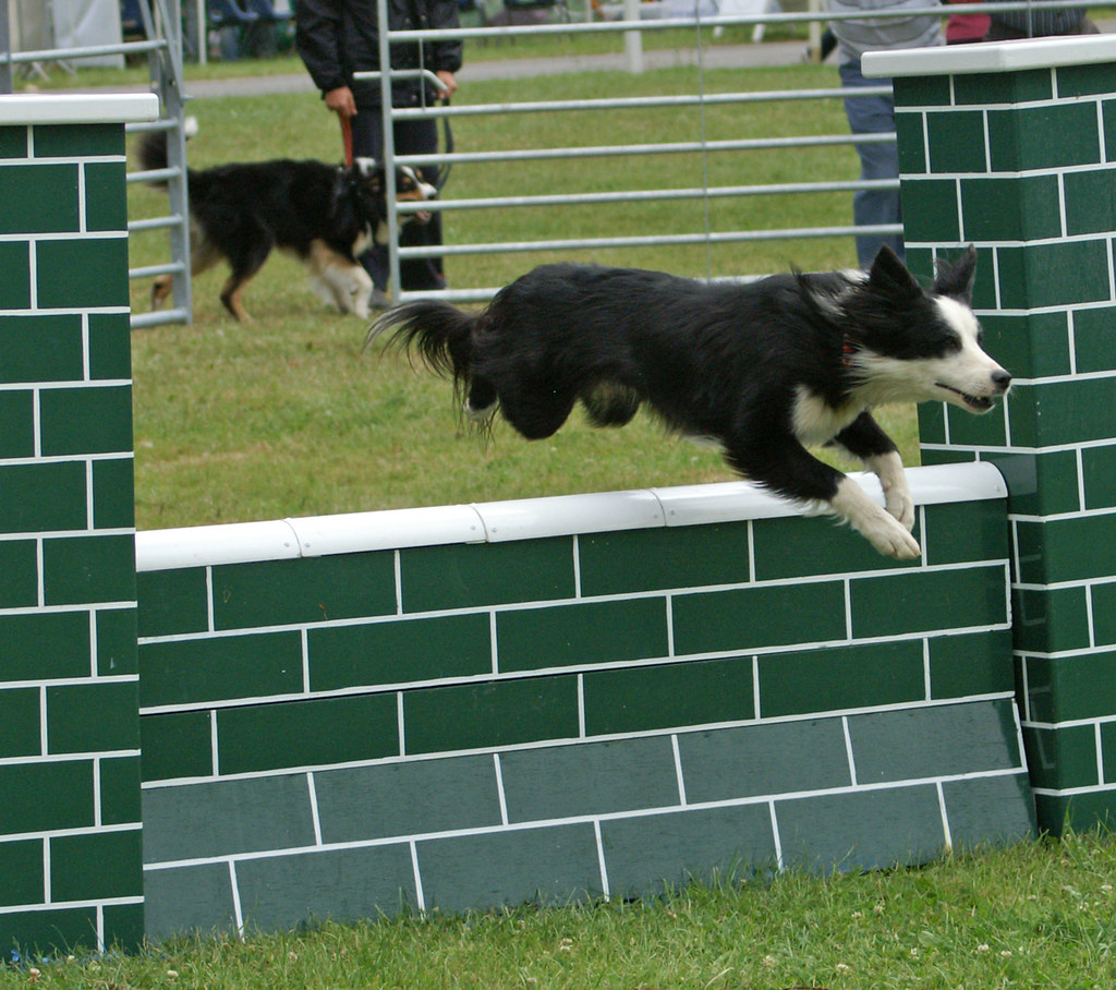 Rugby Dog Agility Show: The Last Royal Show