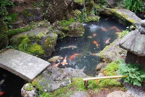 A Pond of Koi in a Japanese Zen Garden