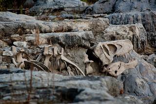Fossil   by randallvangurchom