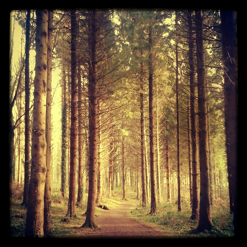 trees ireland green beautiful forest spring portglenone flickrandroidapp:filter=salamander