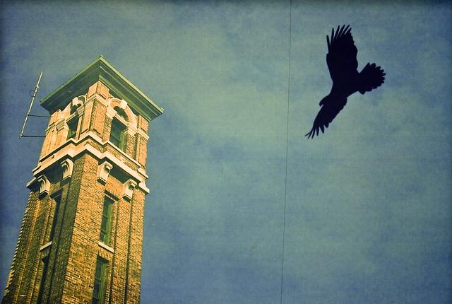 L'oiseau qui ne venait pas de la ville