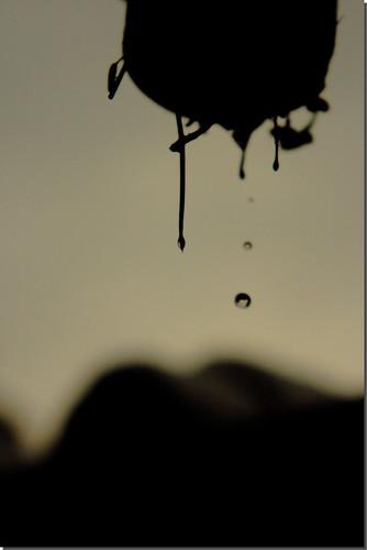 Winter drop [3]