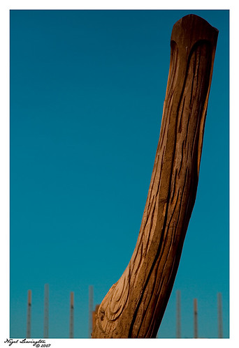 Woody by .Nigel.