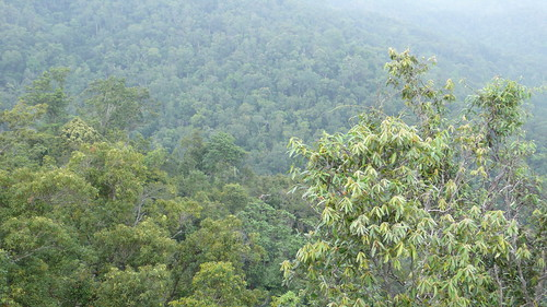 Wed, 09/30/2009 - 14:09 - View across the Lienhuachih forest. Credit: CTFS
