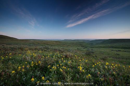 Grasslands National Park - prairie with wildflowers at dawn | by Branimir Gjetvaj