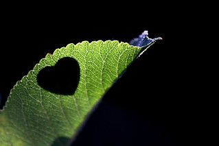I'VE GOT A LOVE THAT I CLING ON TO.. | by Neal.