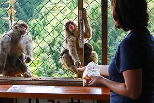 Iwatayama Monkey Park | by Andrea Schaffer
