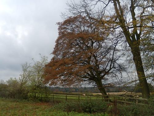 Autumn colours Amersham round walk