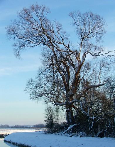 winter snow tree river landscape bank reffley mygearandmepremium mygearandmebronze mygearandmesilver mygearandmegold mygearandmeplatinum mygearandmediamond