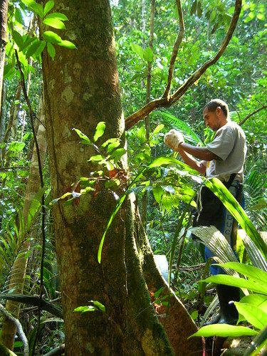 Sat, 08/06/2005 - 19:57 - Mateiro Joao Batista recording data in the 25-ha plot; August 2005. Credit: Kyle Harms.