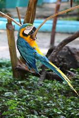 A climbing parrot