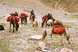 DSC13139 - Nomads with horses - Drass Valley - Leh to Srinagar road - Kashmir | by loupiote (Old Skool) pro