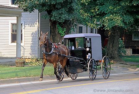 amish-horse-buggy-big