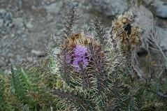 Een of andere bloem waarvan ik de naam vergeten ben...