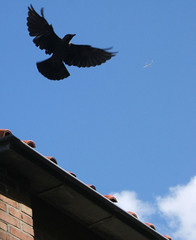 bird and plane