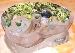 tads-habitat