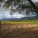North of St. Helena #3 by KAGoldberg
