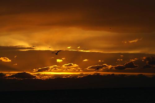 seagulls & sunset