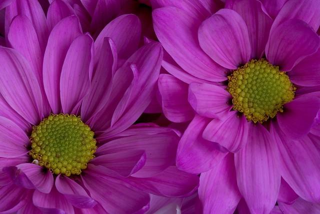 Purple Flower 2.4.2006.jpg