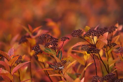 ontario canada fall folhas zeiss canon t colours dof bokeh hamilton contax carl 28 rafael leafs outono hfg sonnar ferreira peixoto