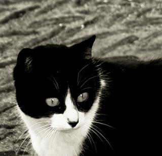 Un gato andaluz.