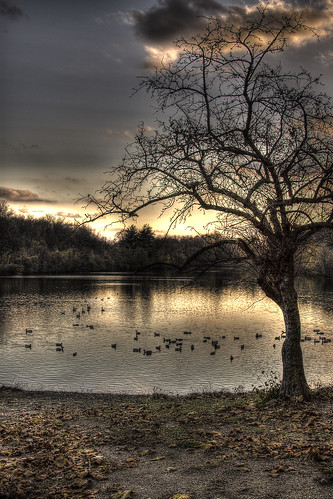 sunset lake tree leaves clouds hdr