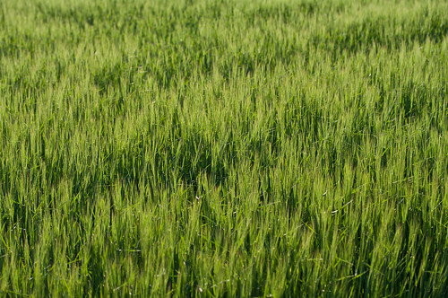 Green crops | by Thomas Backa