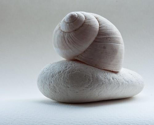 Texture still-life