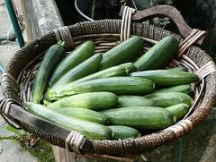 zucchini raccolti oggi | by cristina.sanvito