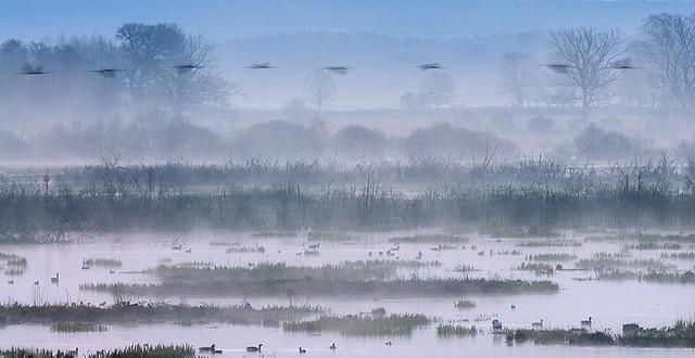 Sweden, misty marsh