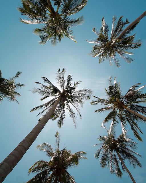 Canon tree
