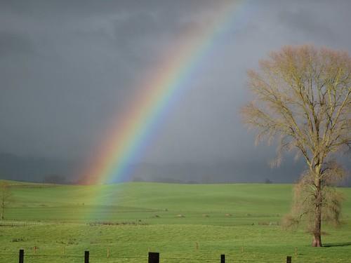 Rainbow fields | by kiwinz