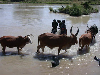 Awash River Basin | by International Livestock Research Institute