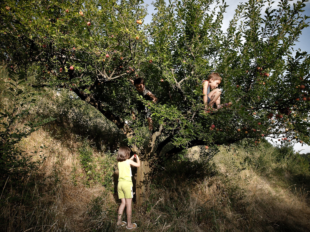 I see you kids on Nanny Scary's plum tree & stealing the plums from it.