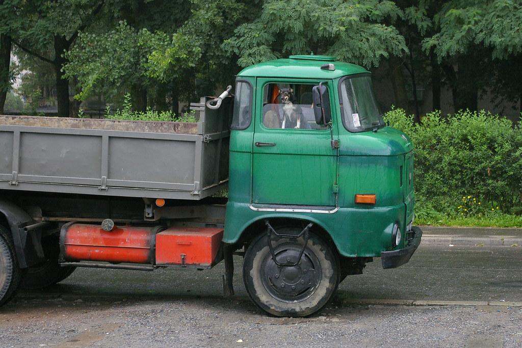 Pies, ktory jeździł  Ifą /  The dog who travelled on an IFA truck