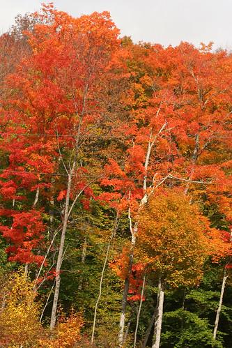 vermont newengland fallfoliage
