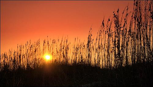 beach dusk southcarolina sunsets charleston sanyo seaoats sullivansisland sanyodigital
