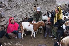 Nomads-of-baba-Ghundi