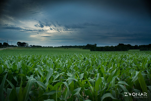sunset field sunrise landscape dawn corn cornfield dusk zvonar mzvonar