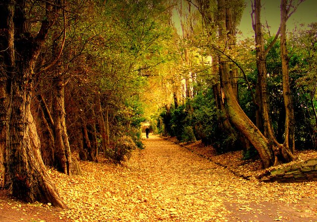 The marvelous magic of British public parks  (Explored 3/10/09)