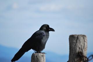 corbeau | by heroesbed