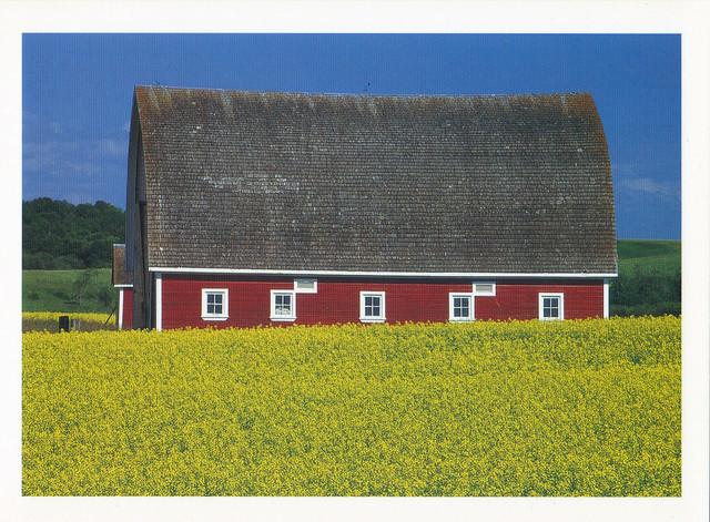 Canada Red Barn & Canola Field  Postcard