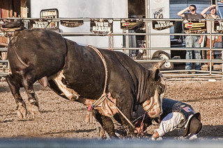 Bull Riding - Pay Back | by Randy Kashka