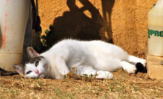 Lazy Cat | by David Surtees
