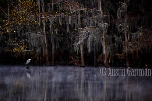 lake cold nature birds animals fog tx jefferson caddo caddolake 34degrees jeffersontx