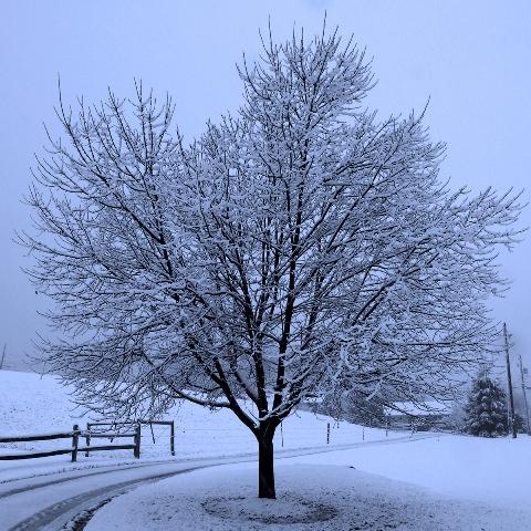 First Snow 011
