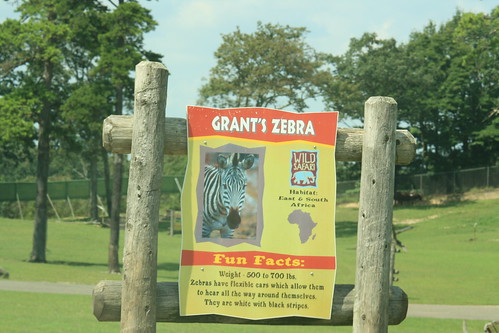 Grant S Zebra Info Sign Habitat Eat Amp South Africa