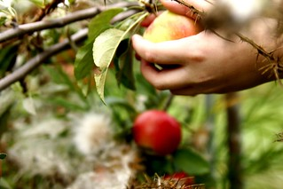 picking apples | by massdistraction