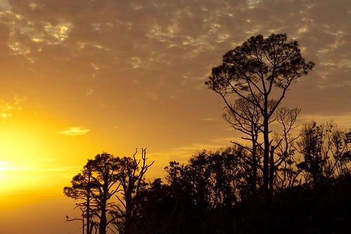 santa county trees sunset orange sun tree silhouette yellow pine clouds islands colorful december gulf florida rosa national sound breeze seashore panhandle santarosacounty 6987 santarosasound gulfbreezeflorida